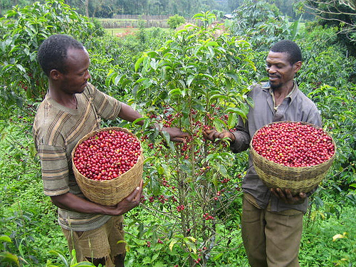ethiopia-coffee-farmers